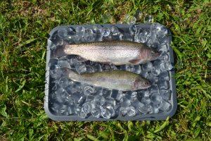 Rybolov na žďárských zámeckých sádkách