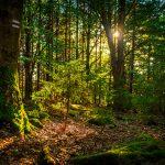 Drátenická skála - v lese