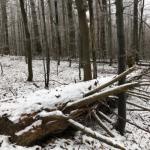 Tip na výlet v zimě - Žákova hora