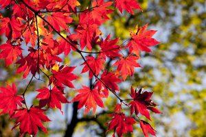 Podzimní ateliéry - zámek žďár